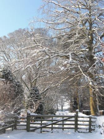 snowy-drive-2-20101